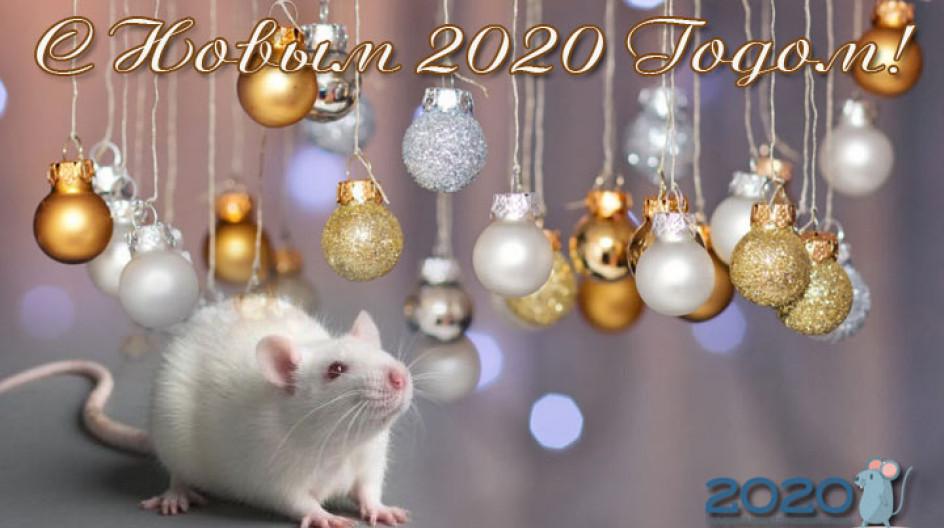 Поздравление с крысой с новым годом